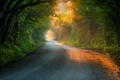 Картинка туннель, деревья, дорога, солнце