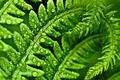 Картинка широкоэкранные, leaves, HD wallpapers, обои, листик, листья, вода, полноэкранные, green, background, fullscreen, капли, макро, зеленый, ...