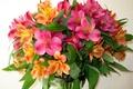 Картинка букет, природа, фото, Цветы, альстрёмерия, цветок