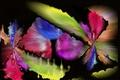 Картинка цвет, узор, пятно, линии, фон