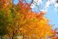 Картинка небо, осень, деревья, листья