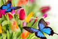 Картинка цветы, flowers, красота, red, разноцветные, жёлтые, Tulips, pink, petals, yellow, butterflies, яркие, оранжевые, bright, varicoloured, ...