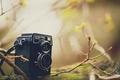 Картинка листья, ветки, фон, дерево, widescreen, обои, размытие, фотоаппарат, wallpaper, разное, широкоформатные, camera, background, полноэкранные, HD ...