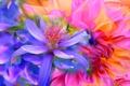 Картинка цветок, линии, краски, лепестки, сад, клумба, штрих