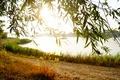 Картинка макро, красота, Берег, природа, пляж, песок, мокрая трава, дикий мир, вечер, вода, настроение, роса, солнце, ...