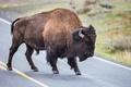 Картинка дорога, рога, мощь, бизон