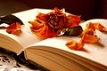 Картинка сухая, лепестки, роза, цветок, книга
