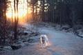 Картинка собака, дорога, свет
