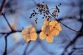 Картинка цветы, зима, картинка, обои с цветами, золото, дерево, солнце, макро, холодно, чудеса, цветочки, свет, мороз, ...