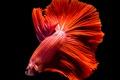 Картинка fish, black, red