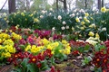Картинка природа, сад, двор, клумба
