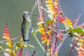 Картинка природа, птица, краски, растение, клюв, колибри