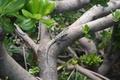 Картинка макро, пресмыкающееся, дерево, листва, зелень, ствол, живое, ящерица, куст, кора