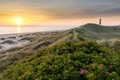 Картинка море, пляж, лето, цветы, восход, маяк, утро