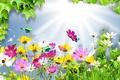 Картинка цветы, лучи, свет, космея, коллаж, листья, бабочка, лето