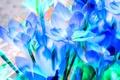 Картинка цветы, лепестки, сад, клумба