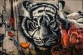 Картинка тигр, краски, граффити, стена