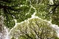 Картинка заказник Рауд Си Вуд, Камбрия, деревья, крона, Англия, дубы