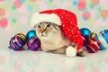 Картинка шарики, игрушки, кошка, колпак, кот