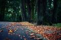 Картинка осень, асфальт, деревья, природа, парк, листва