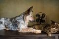 Картинка кошка, собака, ретро, обои от lolita777, пёс, обработка, вентилятор, друзья, кот