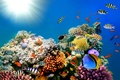 Картинка underwater, coral, коралловый риф, fishes, подводный мир, tropical, ocean, reef