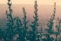Картинка flowers, cliff, sundown, plants, beautiful, nature, sea