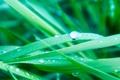 Картинка Трава, капли, зелень, вода