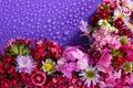 Картинка цветы, много, фон, астры, гвоздики, капли