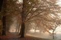 Картинка туман, парк, осень
