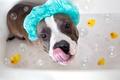 Картинка взгляд, собака, ванна