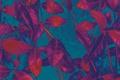 Картинка листья, растение, цвет