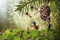Картинка шишка, насекомые, хвоя, мох, ситуация, обои от lolita777, муравьи, макро