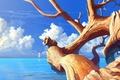 Картинка солнечно, корабль, арт, сухое, парусник, море, дерево, ствол, ветки