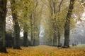 Картинка осень, деревья, город, туман, кладбище, Bishop Auckland, elevation of Hamsterley, County Durham, UK, a walk ...