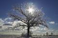 Картинка Winter, snow, tree, sun, snowland