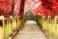 Картинка деревья, красный, фон, дерево, widescreen, обои, лестница, дорожка, ступени, wallpaper, ступеньки, разное, широкоформатные, background, полноэкранные, ...