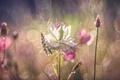 Картинка цветок, макро, боке