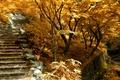 Картинка лестница, природа, ступенки, деревья, fall, autumn, trees, Nature, осень