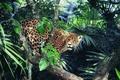 Картинка взгляд, Ягуар, джунгли, солнечный свет