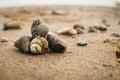 Картинка день, камушки, пляж, ракушки, песок