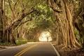 Картинка дорога, велосипедист, природа