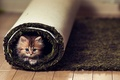 Картинка взгляд, котенок, пол, ковер