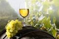 Картинка Бокал, вино, виноград, кисть, бочка
