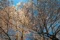 Картинка цветы, небо, дерево, весна