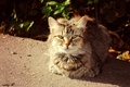 Картинка солнечный кот, кот, осень, кошки