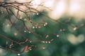 Картинка макро, зелень, природа, ветви, блики, дождь, капли