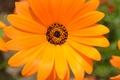 Картинка яркий, макро, Оранжевый, цветок