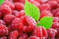 Картинка ягоды, листочек, малина
