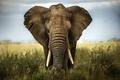 Картинка africa, ivory, savannah, elephant